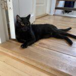 Valby 2500 - Missing Cat