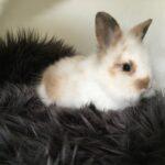 Sød og blød kaninunge