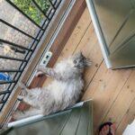 Vores kat forsvandt d.17.07.2021 om aften 19:30