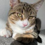 Kærlig kat søge nyt hjem