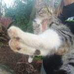 Lille stribet kat