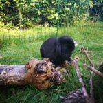 Nuttet, sød han-kanin søger hjem