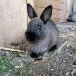Søde tamme hermelin kaninunger
