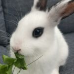 Kom og vælg din egen kaninunge!:)