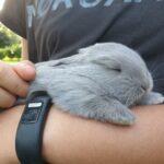 Kaninunger til overtagelse fra 7. oktober
