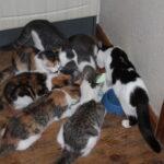 Kattekillinger søger nyt hjem