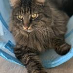Kat efterlyses