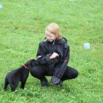Labrador med dkk tavle