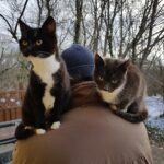 2 katte efterlyses
