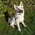 Omplacering af skøn familiehund