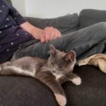 7 mor gammel kat væk