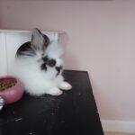 Smuk hun kanin fra slut Juli